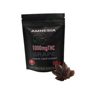 amnesia grape